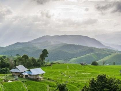 Ban Pa Pong Pieng, les plus belles rizières de Thailande