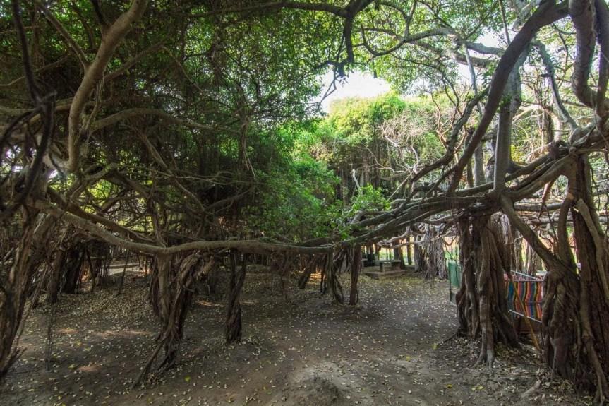 banyan tree sai ngam phimai - thailande
