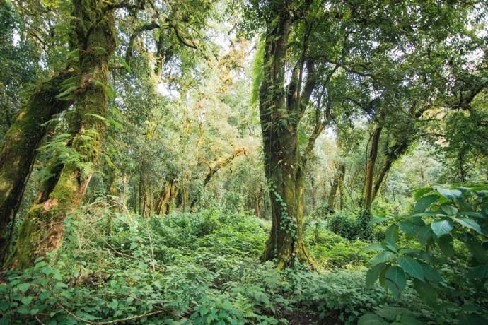 forêt au sommet du doi inthanon - chiang mai