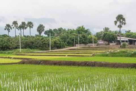 rizieres campagne autour doi inthanon - chom thong