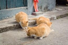 chats village tai o - lantau island hong kong