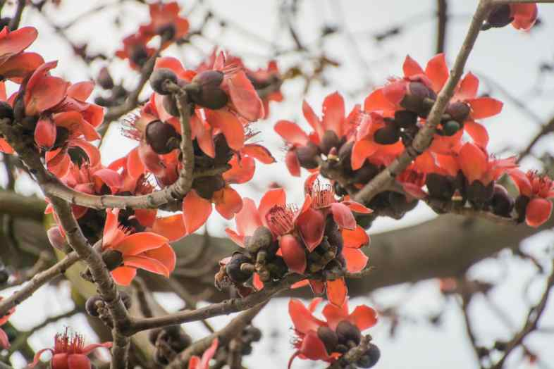 fleurs village tai o - lantau island hong kong