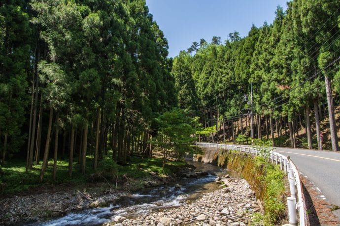 foret sapins route prefecture kyoto - japon