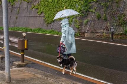 habitant promene chien village ine - japon
