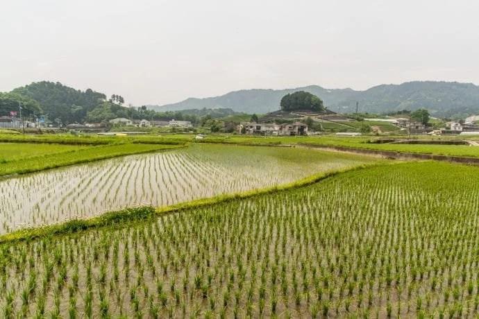 balade velo rizieres wazuka - kyoto prefecture japon
