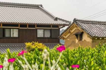 maisons balade velo plantation thé wazuka - kyoto prefecture japon