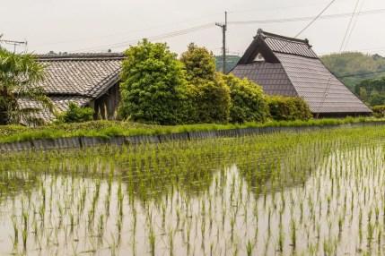 rizieres balade velo wazuka - kyoto prefecture japon