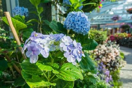 fleur royal park rajapruek - chiang mai