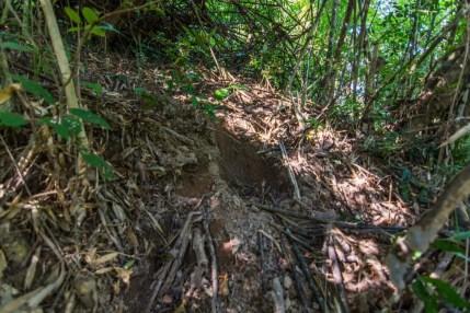 trace elephant pha kluai mai waterfall parc national khao yai - thailande