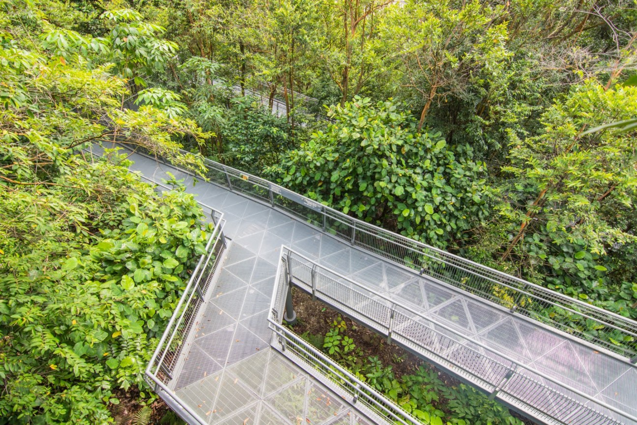 chemin canopy walk southern ridges - singapour