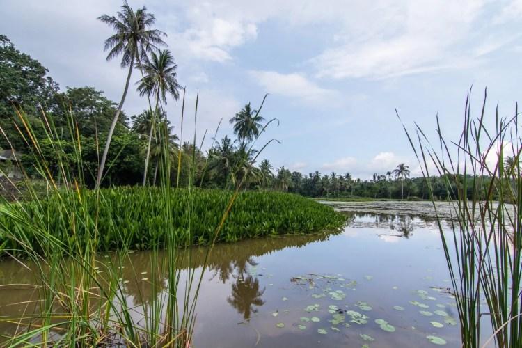 etang lotus sensory trail pulau ubin singapour