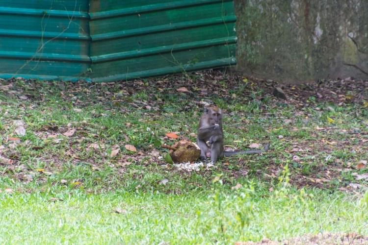 singe sensory trail pulau ubin singapour