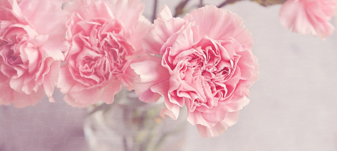 light_pink_carnations_flowers_in_a_vase-wallpaper