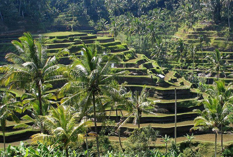 Bali panorama