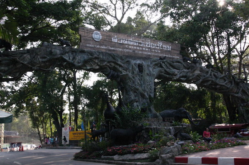 Chiang Mai Zoo Reopens After 3-Month Closure Due to Coronavirus