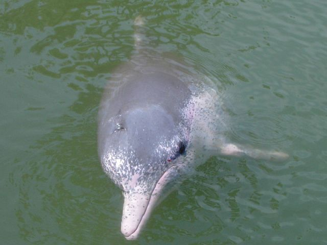 Marine officials rescue beached dolphin in Trat