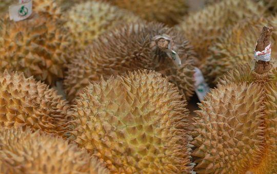 Durian fruits (Durio zibethinus)