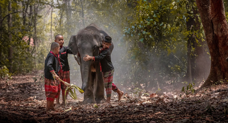 Thai children playing with an Elephant