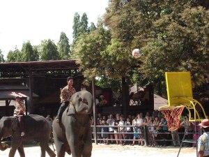 Elephants playing basketball at Nong Nooch Orchid Wonderland, Pattaya