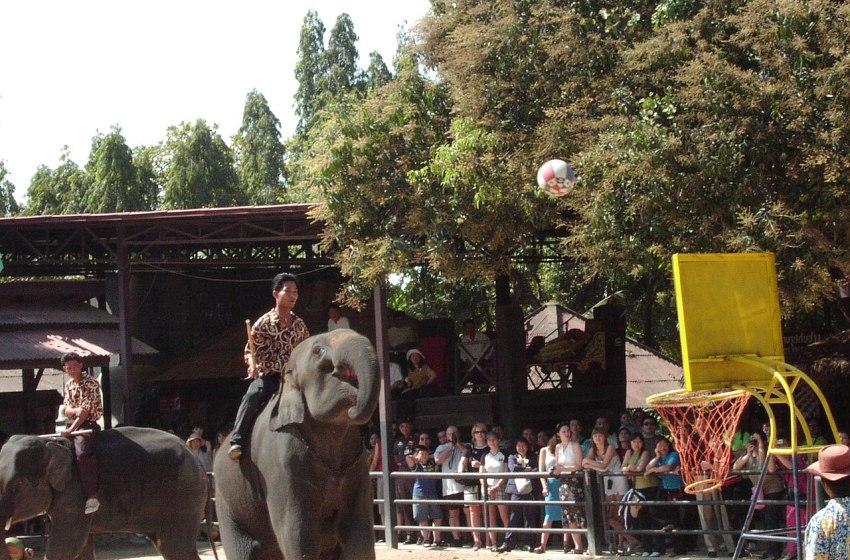 Jobless Pattaya elephants begin 500km walk home