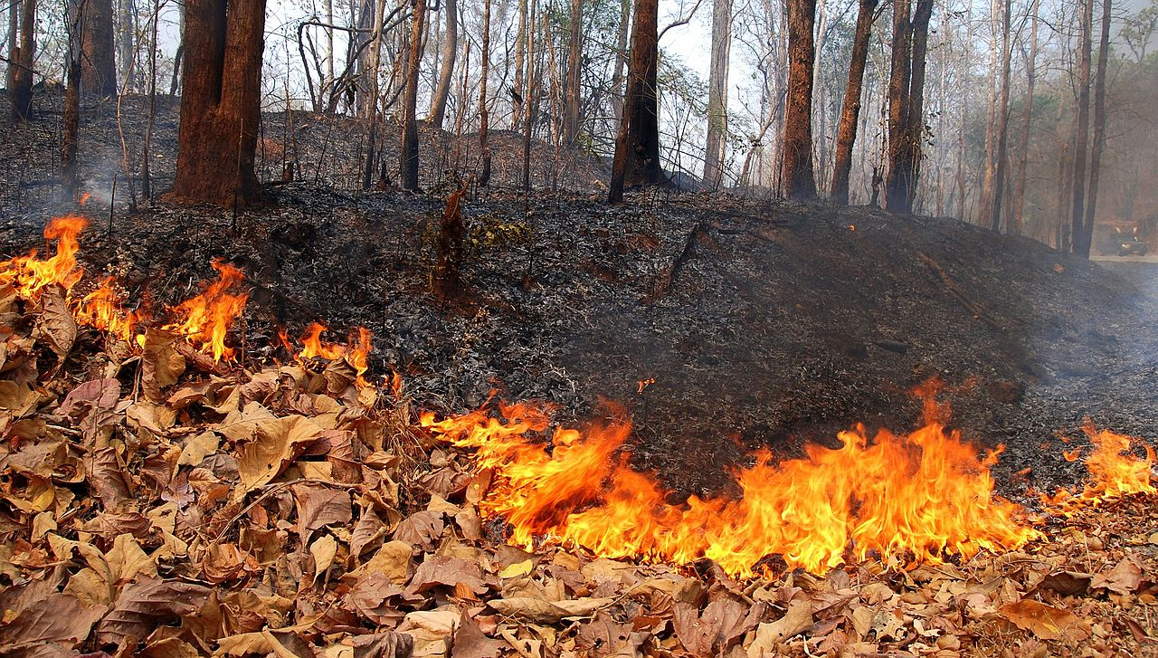 Chiang Mai stepping up efforts against forest fires