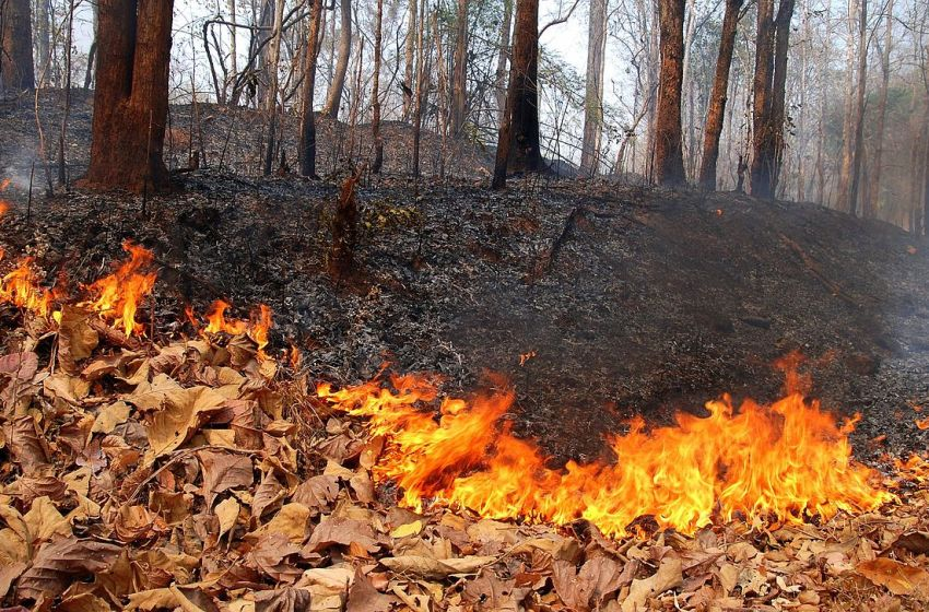 Forest fire in Mae Hong Son province, Northern Thailand