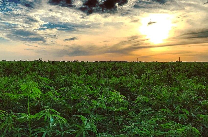 FDA Gives Green Light for Hemp Growing