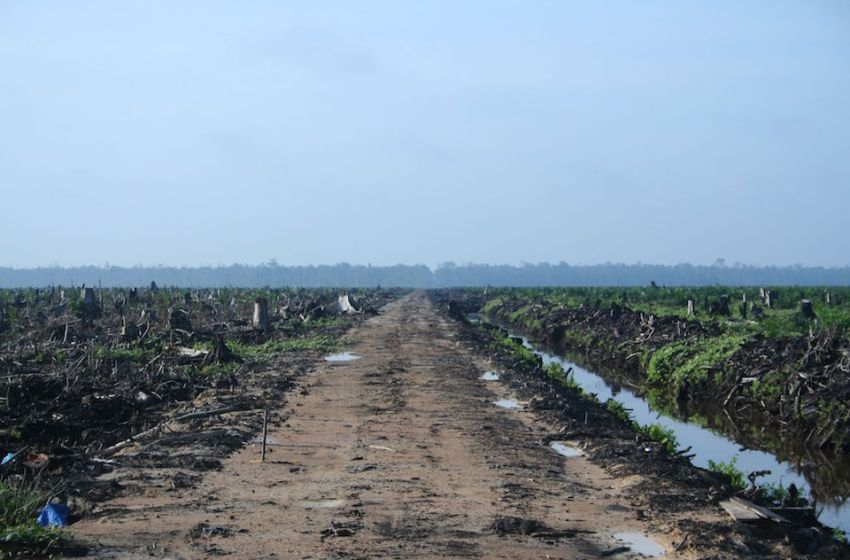 Palm Oil Producing Countries to Increase Biodiesel Use