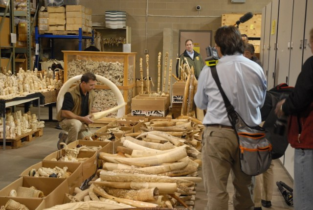 100 tons of ivory burned in Africa, worth $250,000 on the black market