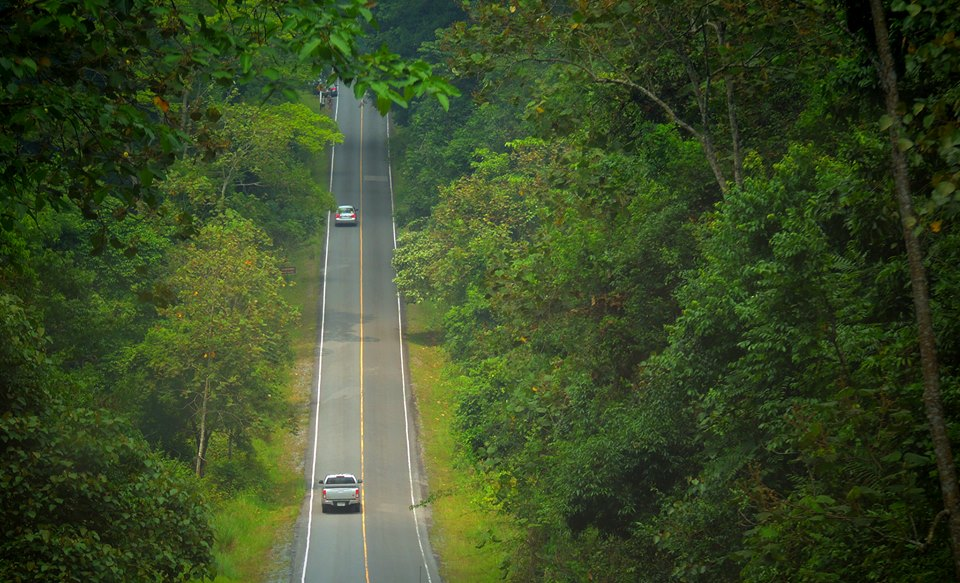 A road in Khao Yai National Park
