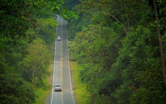 A road in Khao Yai National Park