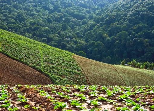Phu Thap Boek in Phetchabun Province