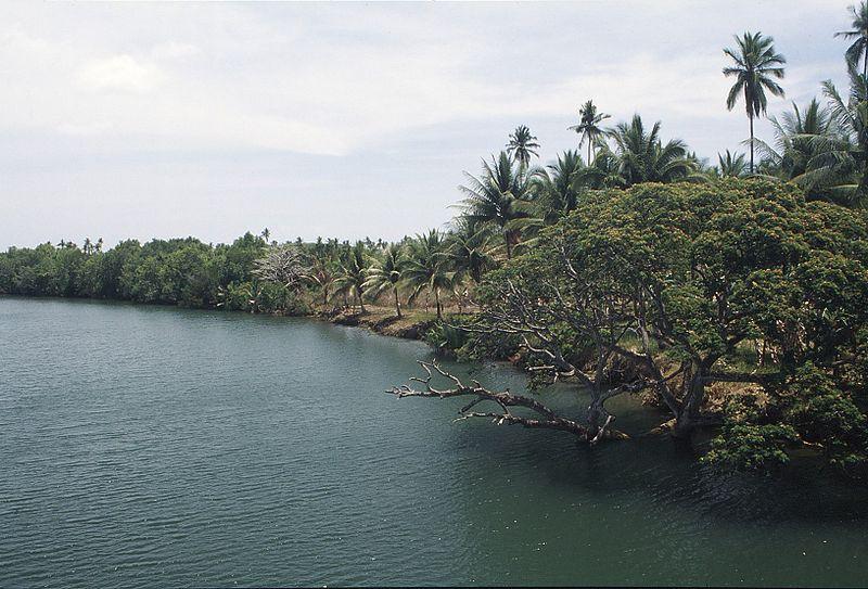 Palawan river bank