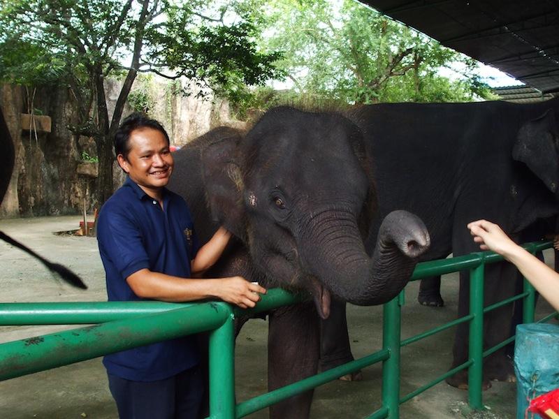 Sriracha Tiger Zoo puts its 11 elephants up for sale