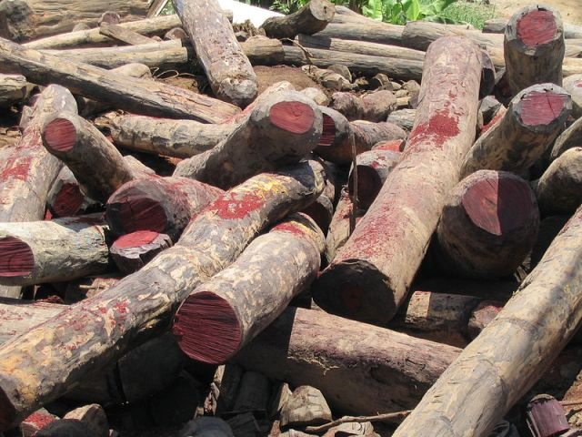 Three arrested with protected Siamese rosewood in Si Sa Ket