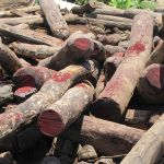 Illegal logging of Rosewood
