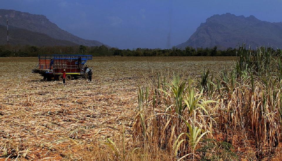 Farmers in Thailand