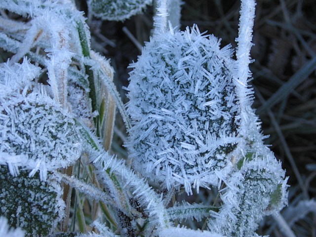 Mercury on Doi Inthanon plunges to minus 2C