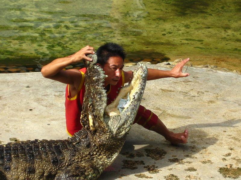 Crocodile show at Sriracha Tiger Zoo in Chonburi