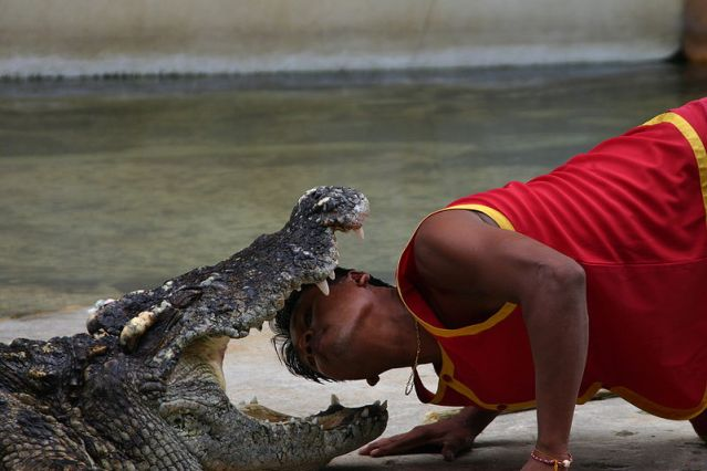 Video: Crocodile bites trainer during show in Samut Prakan