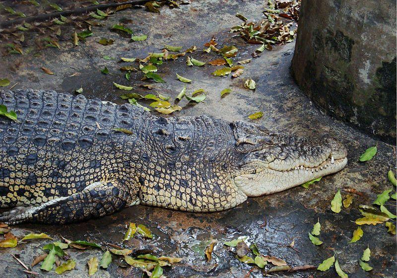 Depressed woman commits suicide by crocodile in Samut Prakan