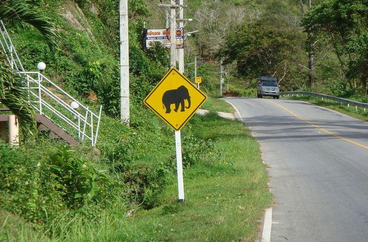 Elephant warning traffic sign in Phuket