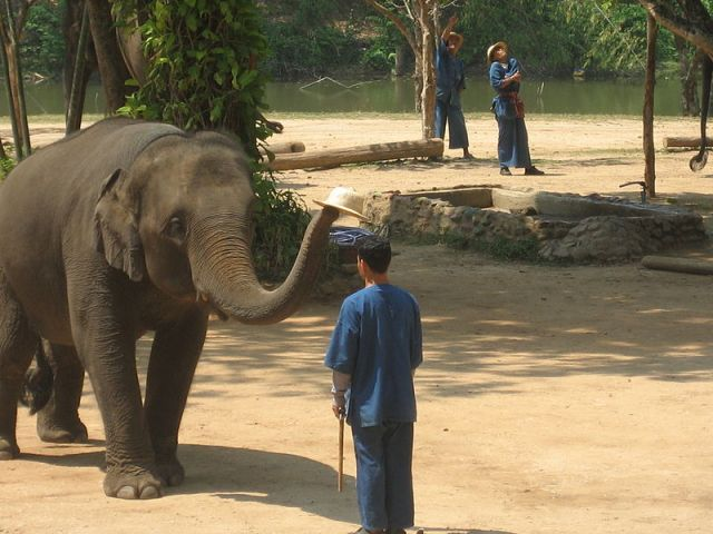 Elephant painting in Thailand (Video)