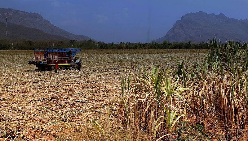 Drought intensifies across Thailand
