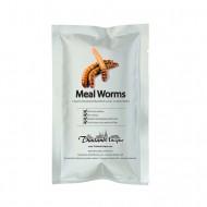 Edible Meal Worm Larval - Tenebrio Molitor