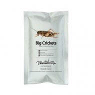 Edible Big Crickets - Gryllinae