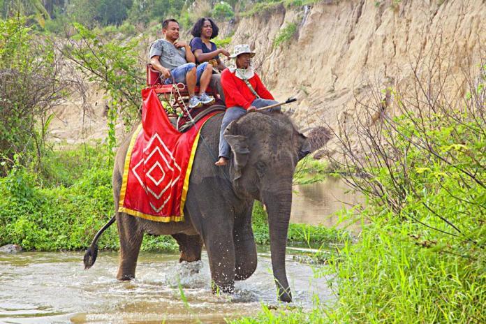 safari_park1