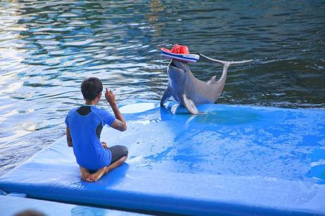 dolphin_world