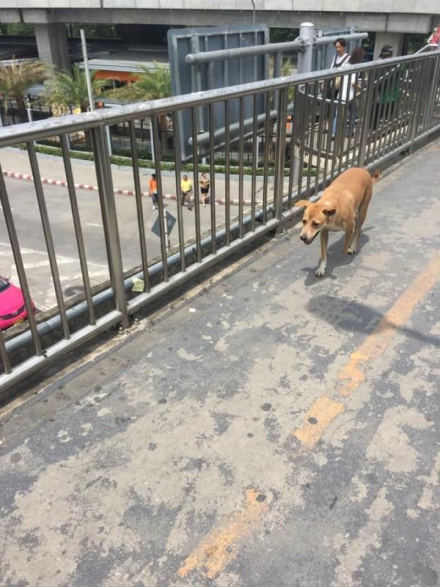 น้องหมาแสนรู้ นั่งรอส่งสาวไปทำงานทุกวัน