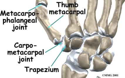 trapezium-carpometacarpal
